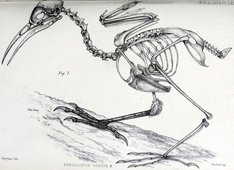 Bird Core