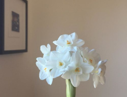 The Lesson of the Narcissus: Bloom When Ready!